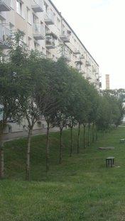 Pleszew, osiedle Reja
