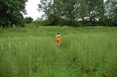 buskie łąki