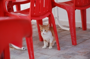kot z plaży Curium